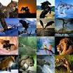 Hayvan Irkları