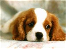 Evcil Hayvanlar�n T�bbi Tedavide Kullan�lmas� Sorgulan�yor