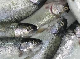 Türkiye, balıkçılıkta Norveç'i örnek almalı