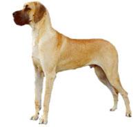 Köpek Dövüştürenlere Büyük Cezalar Verildi