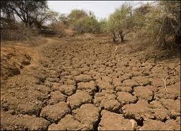 Kuraklaşan Topraklar Yeniden Verimli Hale Getiriliyor