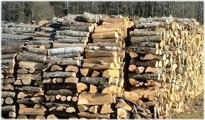 Metil Bromür şartı odun ithalatını durdurdu