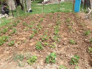 Erzurum Tarımında Örnek Sebze Bahçeleri Projesi
