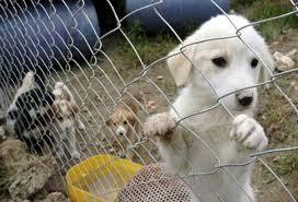 Sokak Hayvanlarını Kontrol Toplantısı Yapıldı