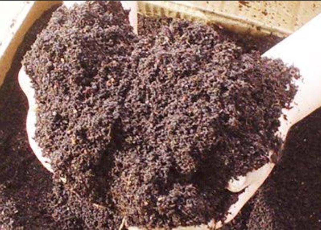 Yarasa Gübresi - Üretici Masum Koca 10 tl fiyat ile 10 kilogram yarasa gübresi  satmak istiyor