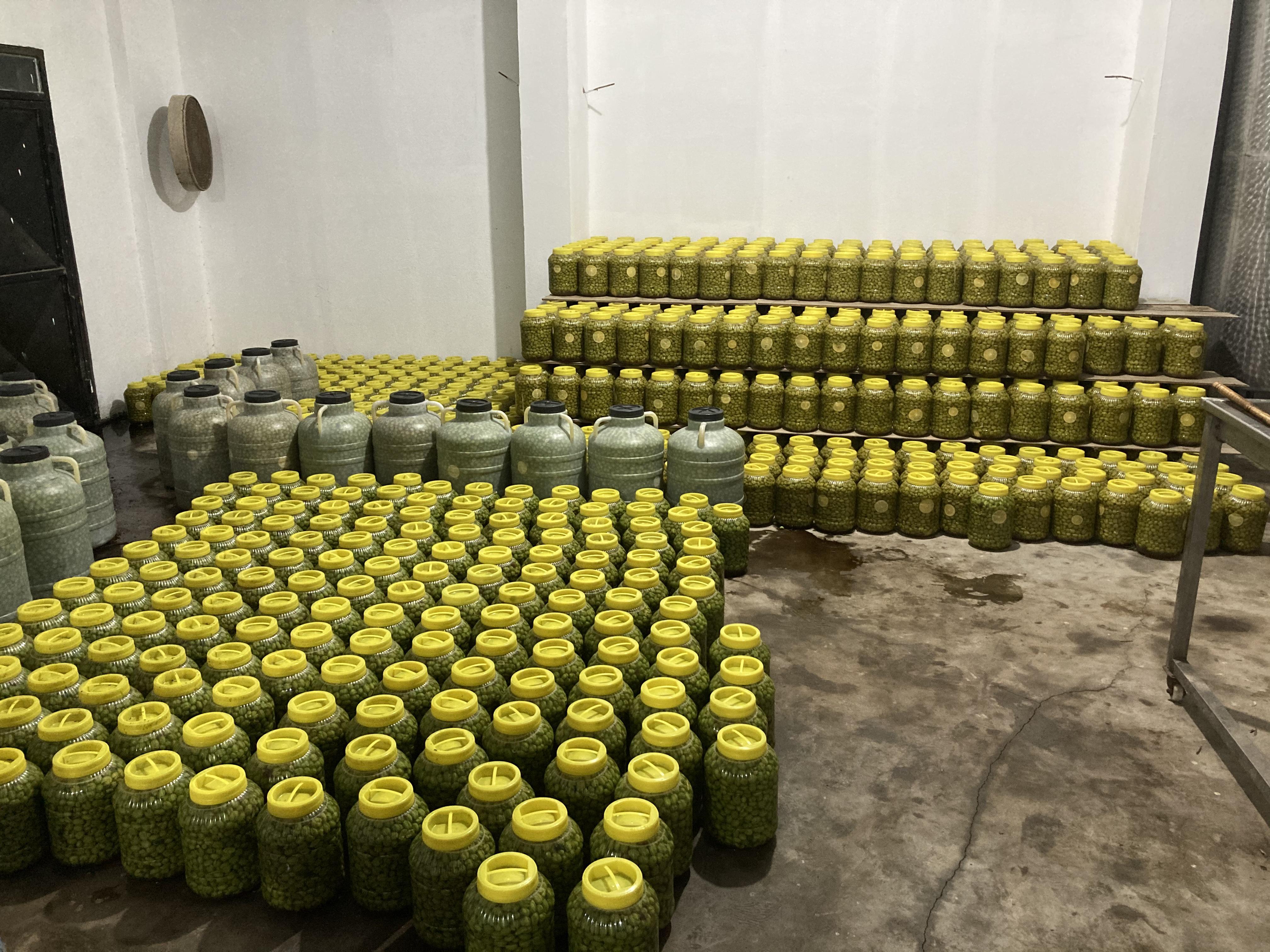 Zeytin - Üretici Ali Özalp 13.5 tl fiyat ile 5.000 kilogram zeytin  satmak istiyor