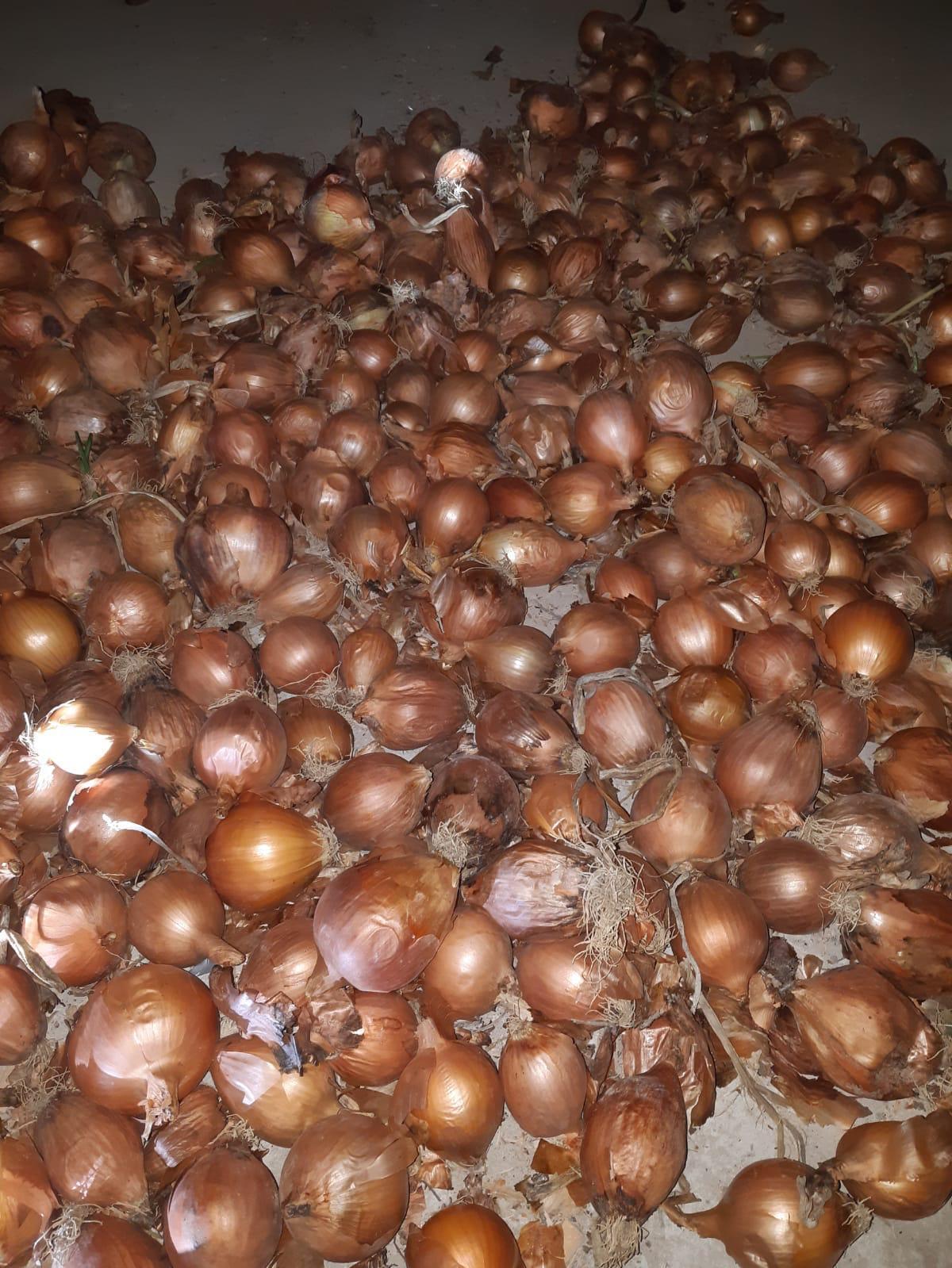 Kuru Soğan - Üretici Muhammet Beyoğlu 1300 tl fiyat ile 14 kilogram anka çeşidi kuru soğan satmak istiyor