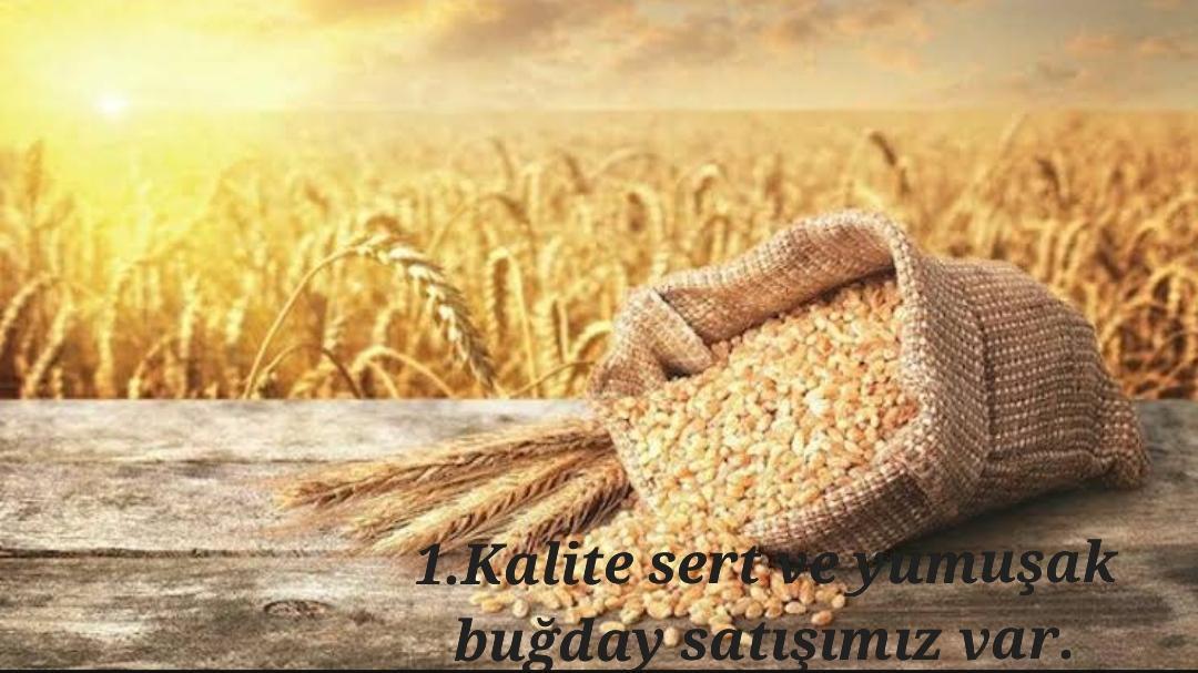 Mardin Kızıltepe Satılık Buğday (Ekmeklik)