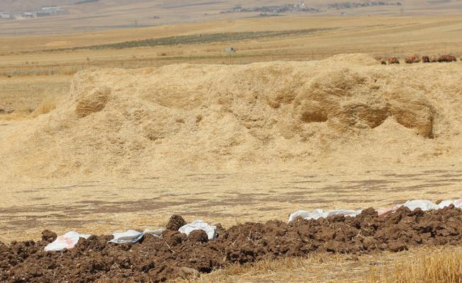 Buğday samanı - Üretici Mehmet Yiğit 0.7 tl fiyat ile 85.000 kilogram buğday samanı  satmak istiyor
