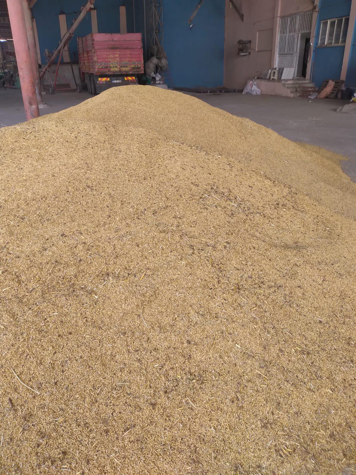 Arpa - Üretici Metin Tosuner 2.5 tl fiyat ile 500 kilogram arpa  satmak istiyor