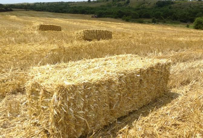 Çorum Alaca Satılık Buğday samanı