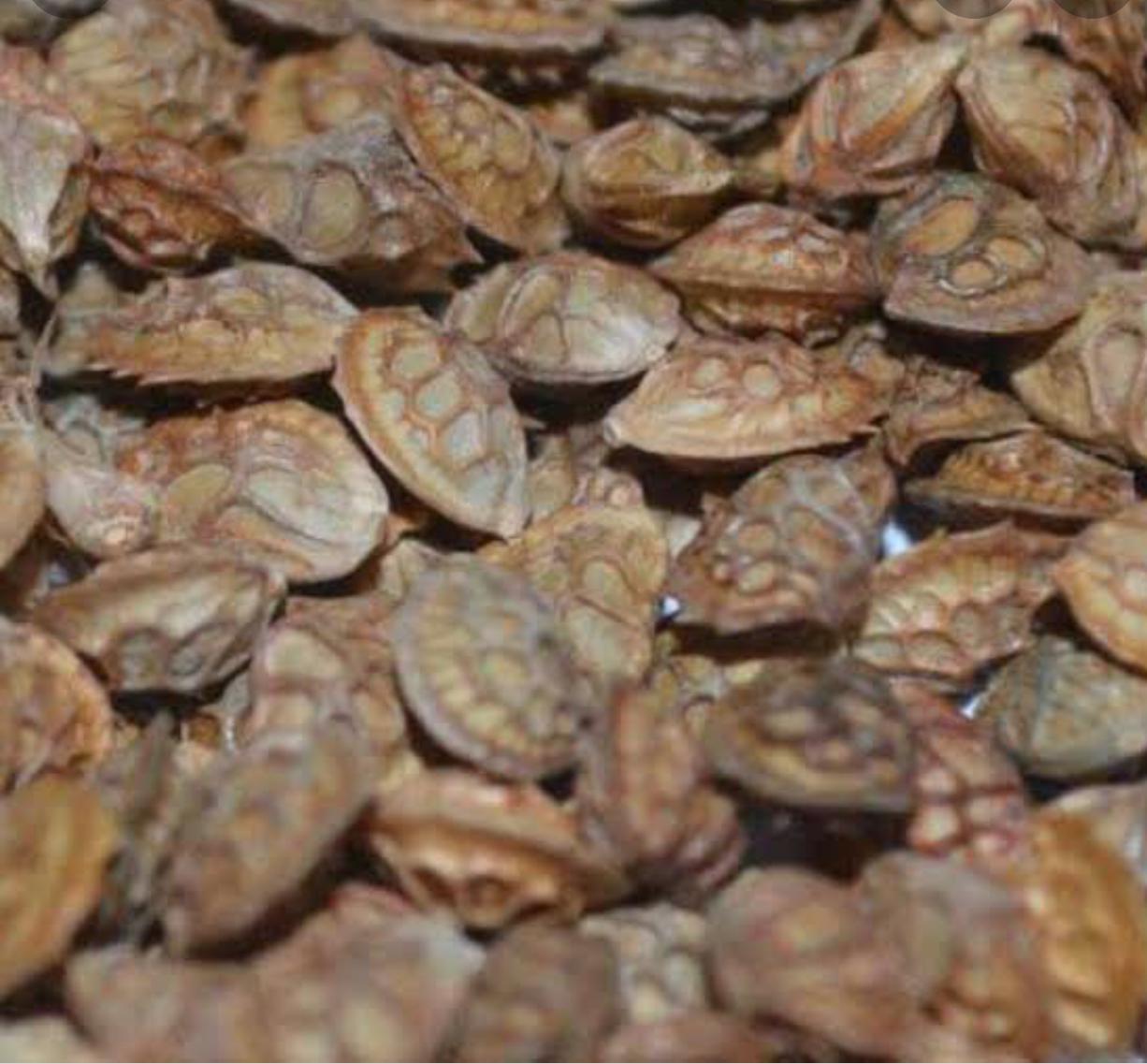 Korunga - Üretici Recep Oltekin 11 tl fiyat ile 40 kilogram korunga  satmak istiyor