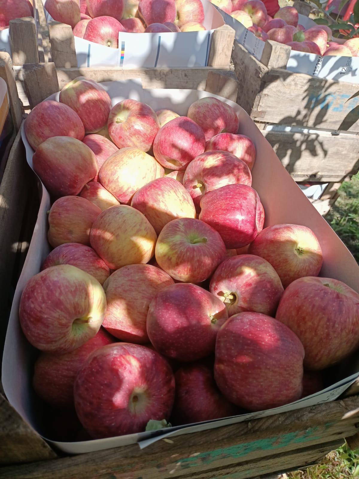 Tokat Merkez Satılık Elma