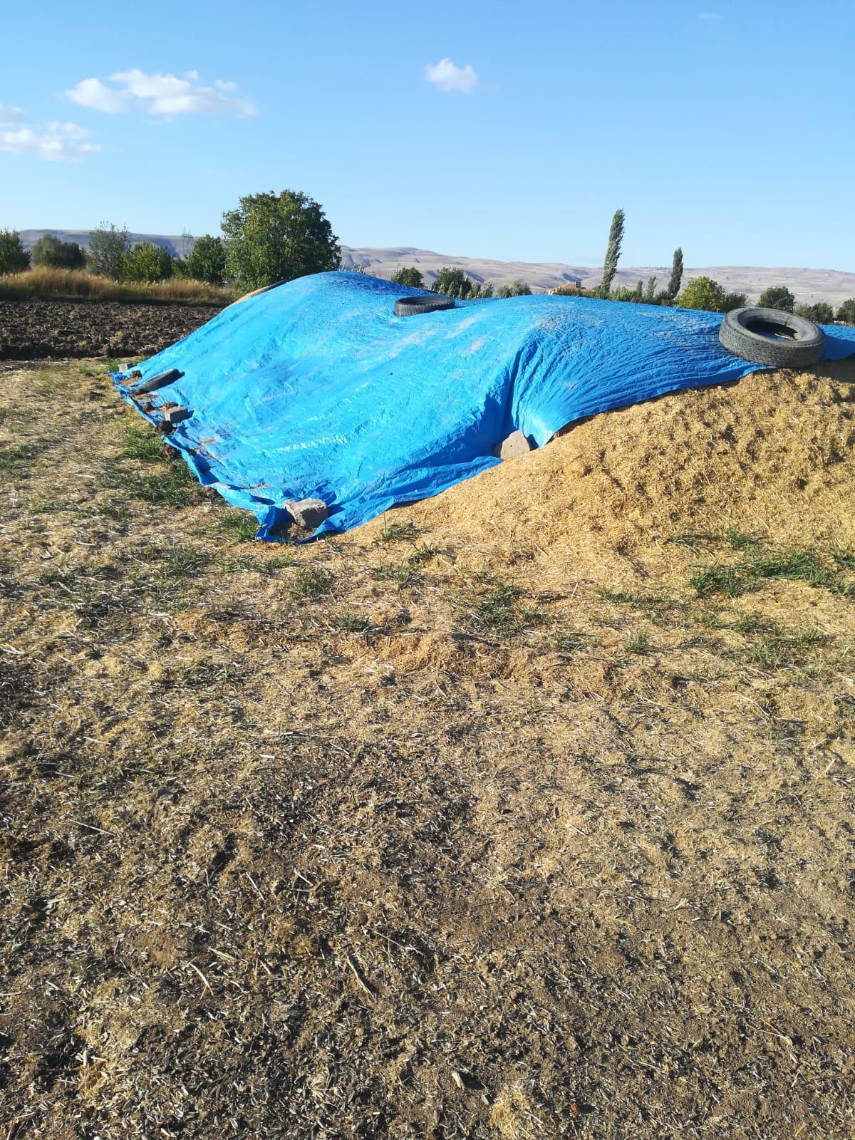 Buğday samanı - Üretici Enes Korkmaz 700 tl fiyat ile 15 kilogram buğday samanı  satmak istiyor