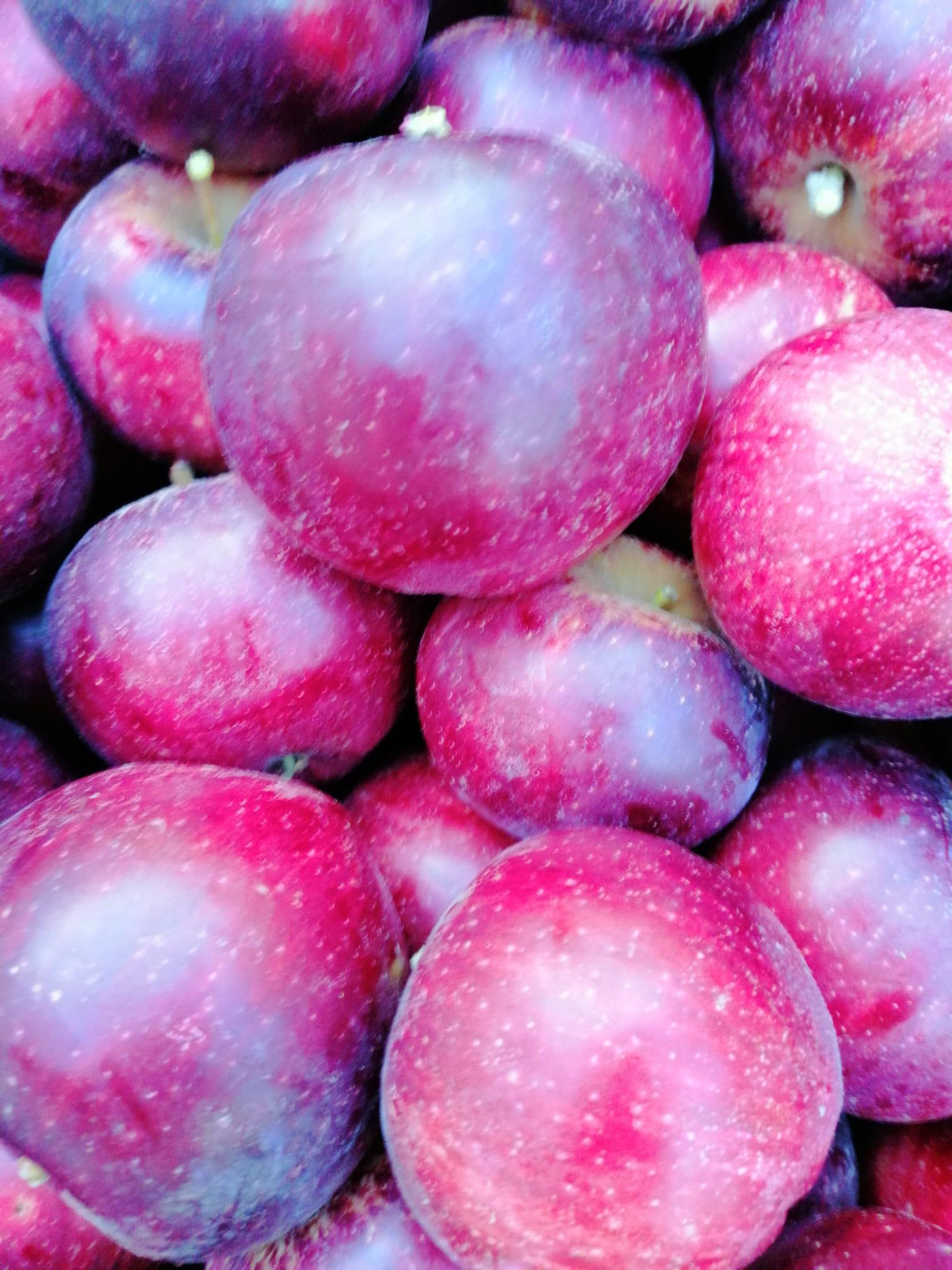 Kastamonu Tosya Satılık Elma