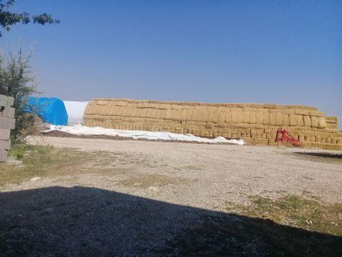 Arpa samanı - Konya Cihanbeyli Satılık Arpa samanı-14462