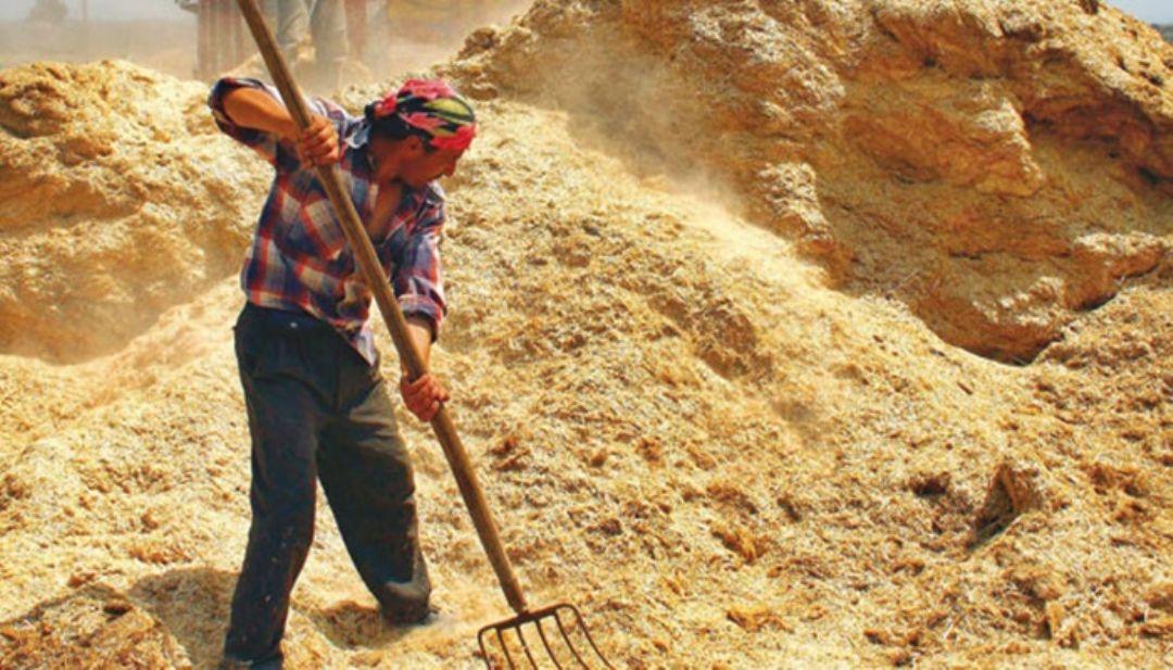 Arpa samanı - Tarlada Satılık Arpa Samanı Toz Veya Isteğe Göre Balya Yapıla Bilir Kayseri Pınarbaşı Kayabaşı Köyünde