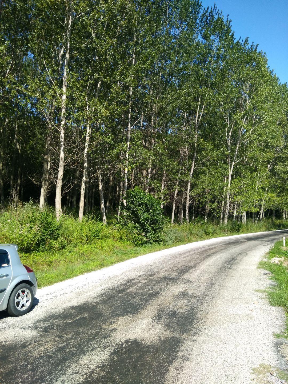 Kavak ağacı - Tarlalar Hepsi Yol Boyudur Aktarmaya Gerek Kalmaz Ağaçlar 11 Yasindair Dali Budagi Herşeyiyle Satilik