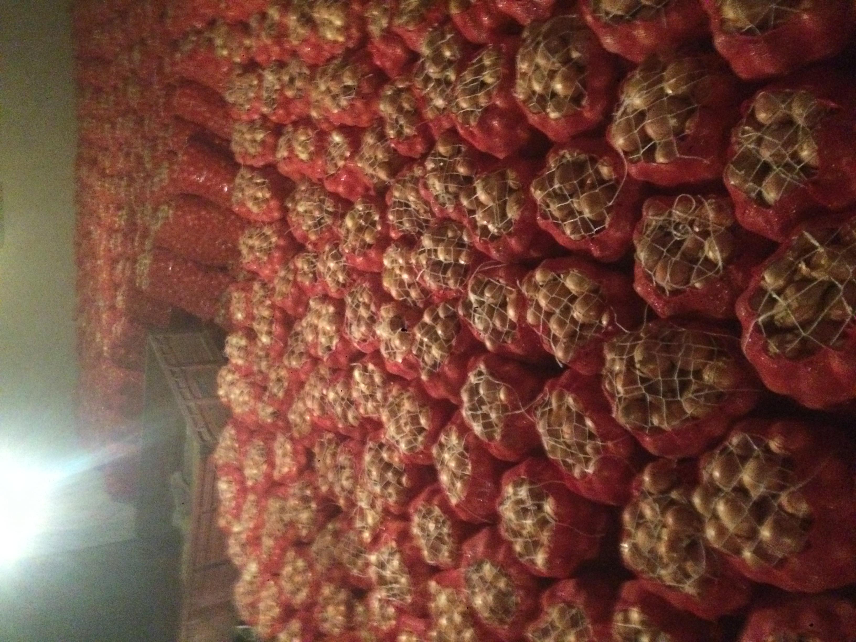 Hastalıksız depoluk soğan resimi fotoğrafı
