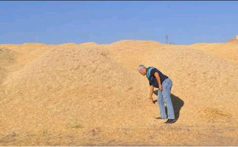 Satılık Buğday samanı - 3473