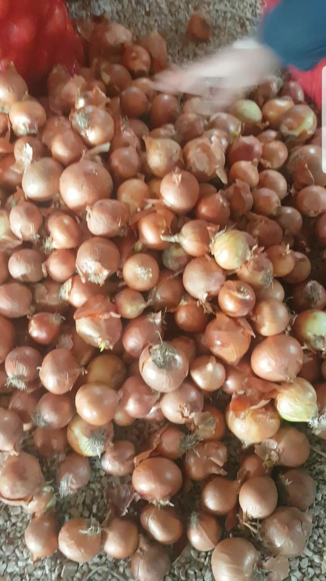 Polatlı Son 170 Ton Kuru Soğan resimi fotoğrafı
