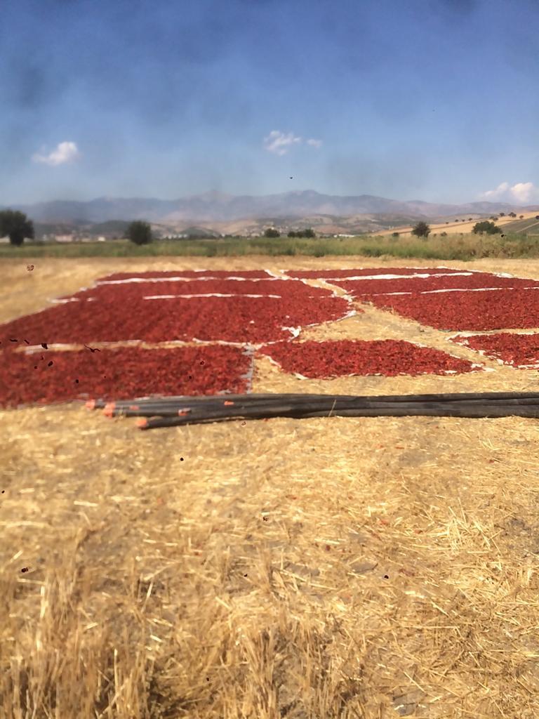 Pul Kırmızı biber - Merhaba Maraş Biberi Yapılmış Mamaül Veye Sapı Çekilmemiş Mevcuttur 05324085941