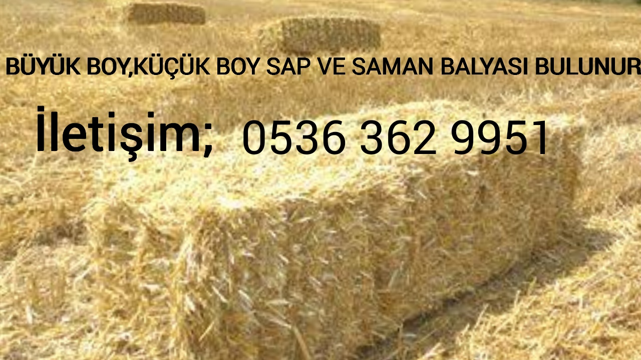 Buğday samanı - Üretici Abdulkadir  Acar Abdurahim Acar 11111 tl fiyat ile 111.111 kilogram buğday samanı  satmak istiyor