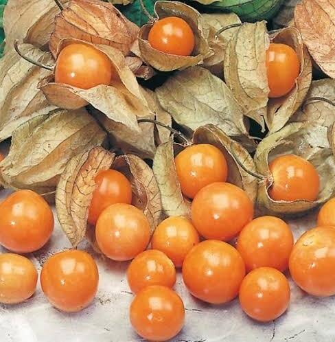 Altın Çilek resimi fotoğrafı