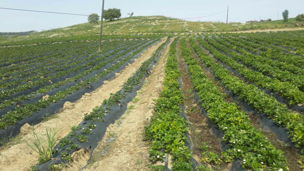 Organik Solucan Gübresi resimi fotoğrafı