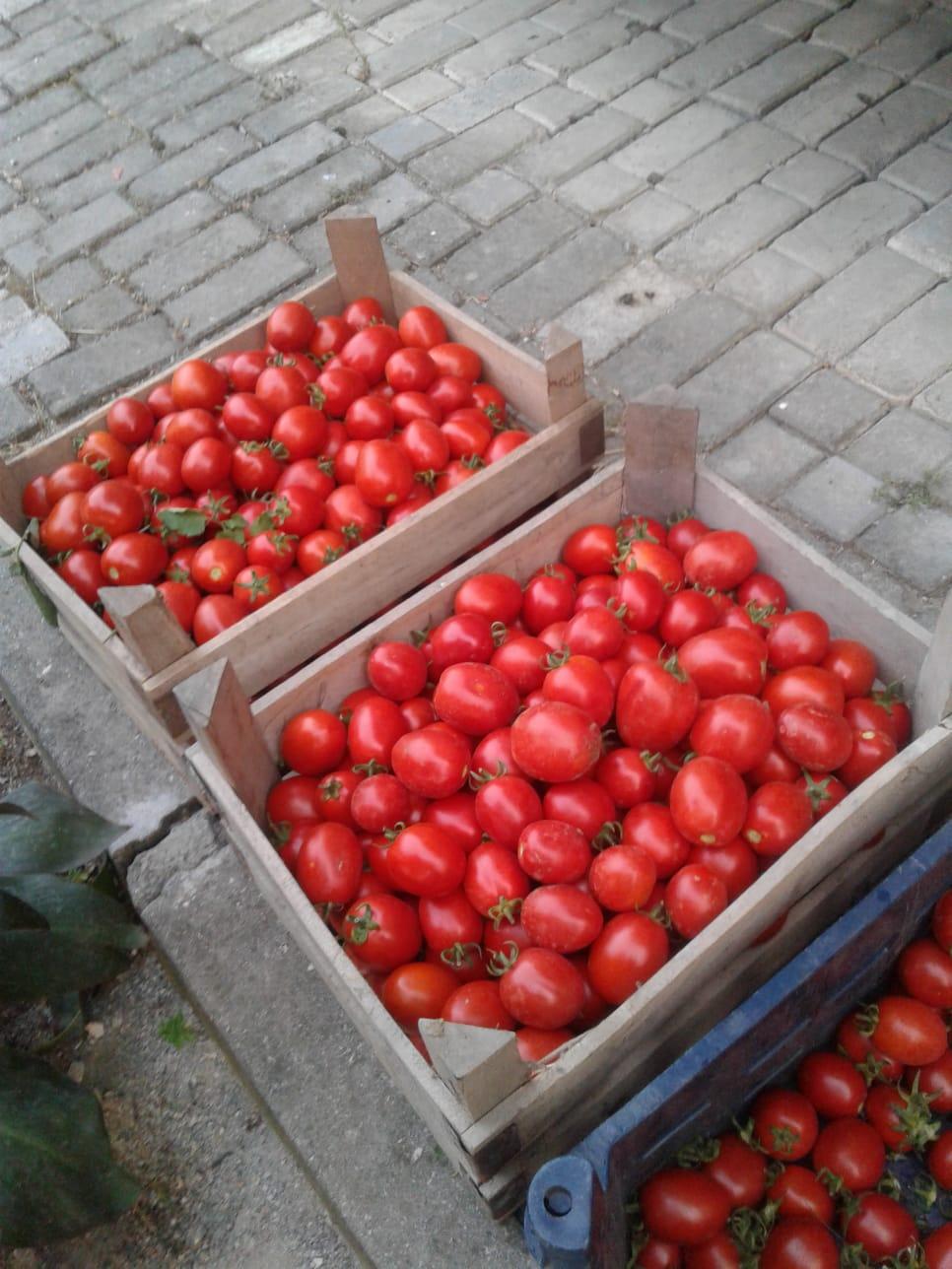 Domates - Üretici Salim Çanakçılar 0 tl fiyat ile 7.000 kilogram benito f1 çeşidi domates satmak istiyor