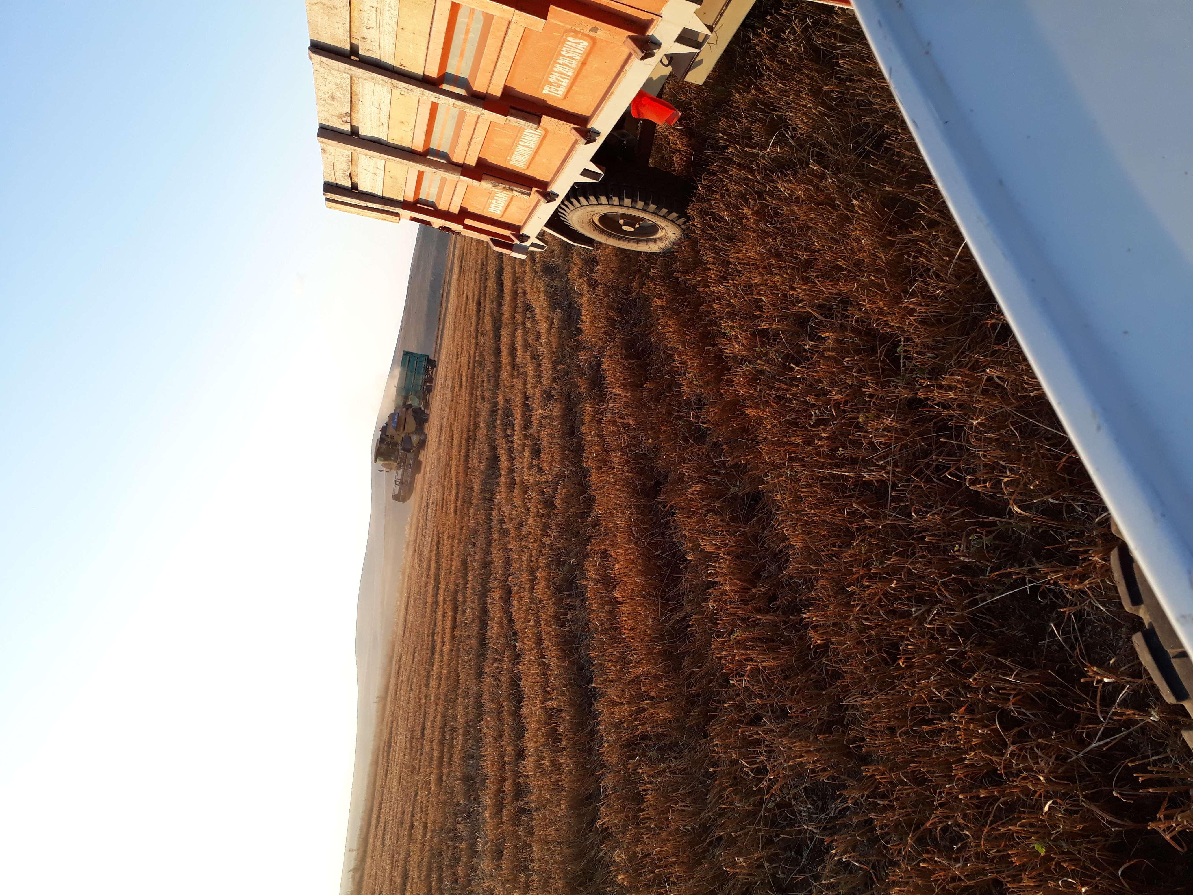 Buğday samanı - Üretici Orhan Yalçın 400 tl fiyat ile 30 kilogram buğday samanı  satmak istiyor