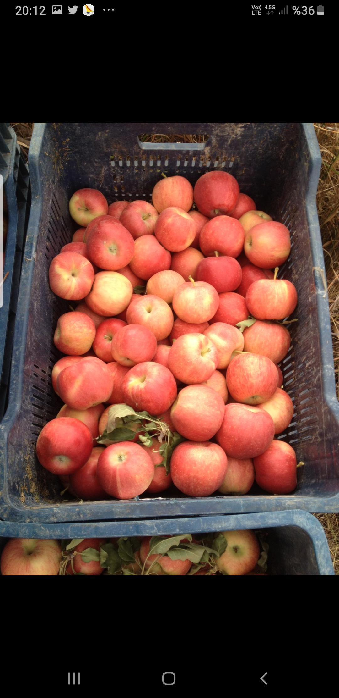 Elma - Üretici Mehmet Tarınç 2.3 tl fiyat ile 50.000 kilogram mondial gala çeşidi elma satmak istiyor