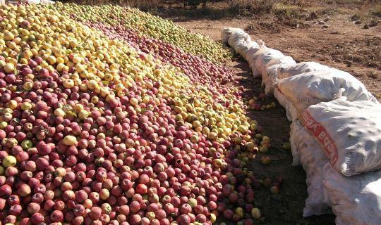 Konya Ereğli Elma alımı