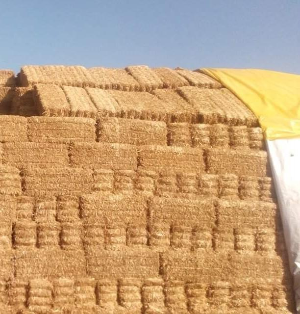 Buğday samanı - Üretici Şelale Çeri 1 tl fiyat ile 1 kilogram buğday samanı  satmak istiyor