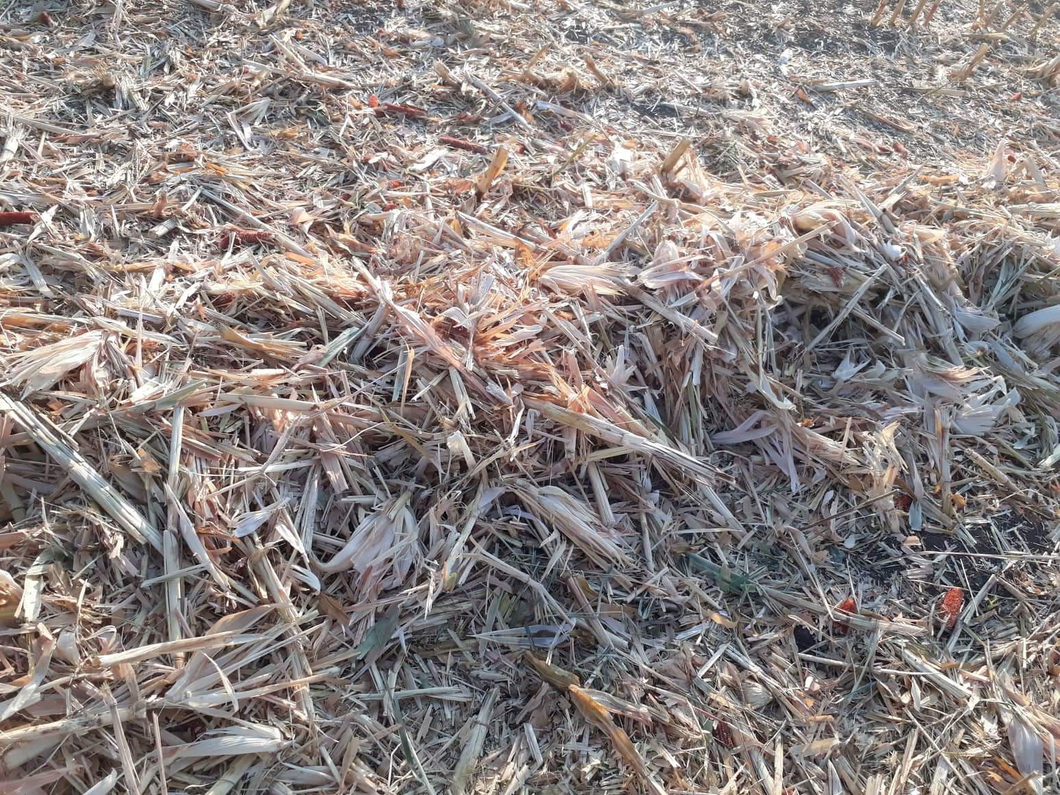 Darı Samanı - Üretici Murat Karakaya 10 tl fiyat ile 10 kilogram darı samanı  satmak istiyor