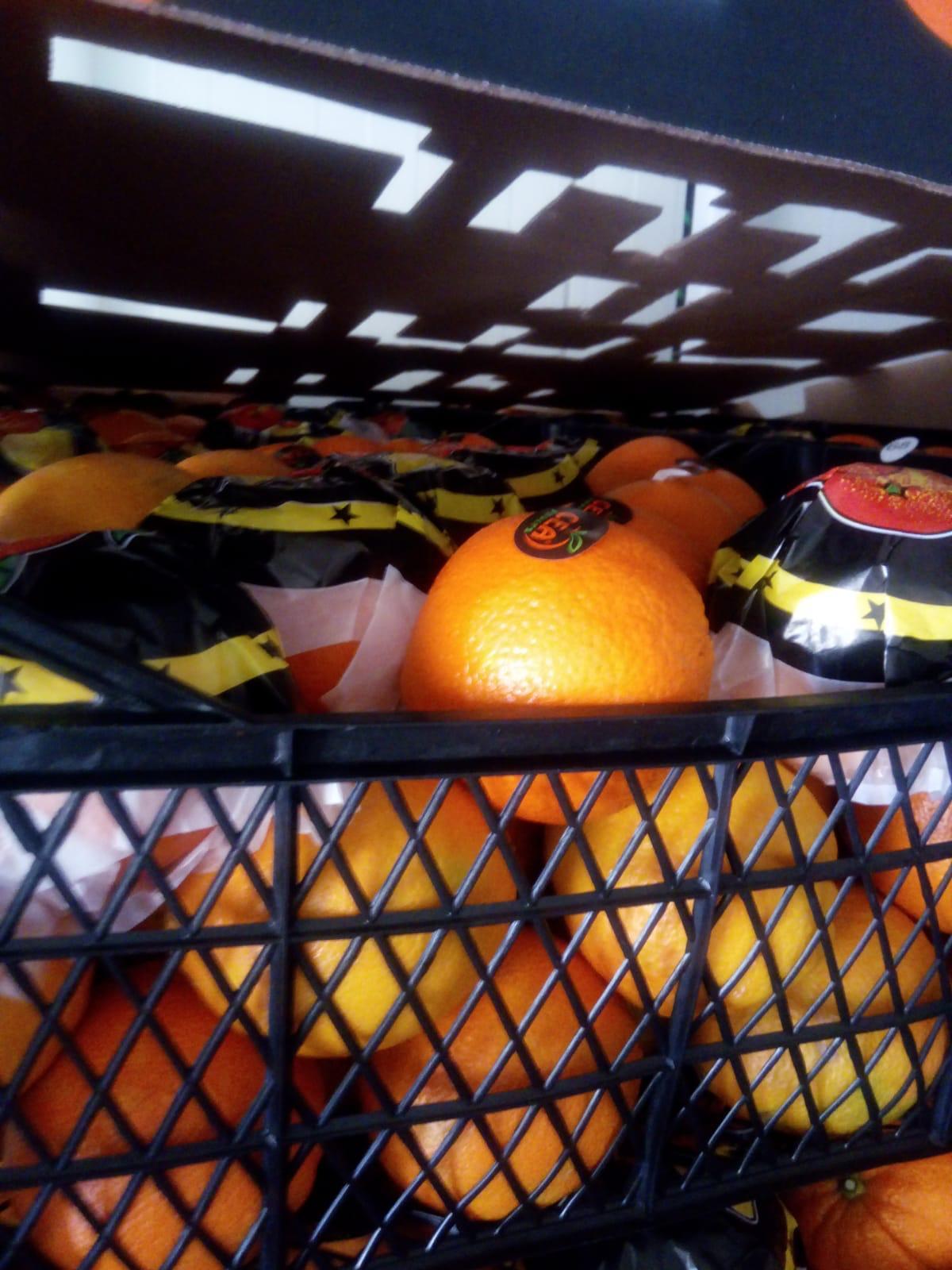Kocaeli Gebze Satılık Portakal