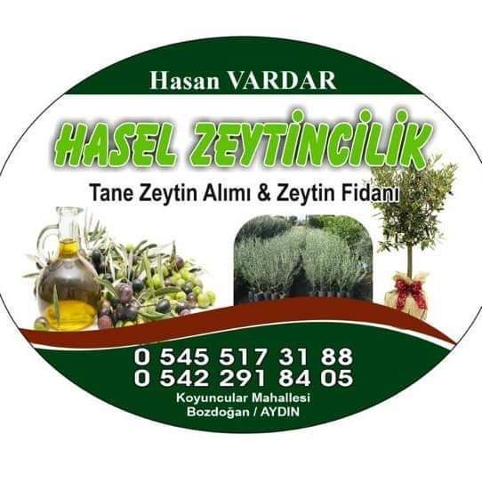 Zeytin fidanı - Üretici Hasan Vardar 5 tl fiyat ile 40.000 adet zeytin fidanı  satmak istiyor