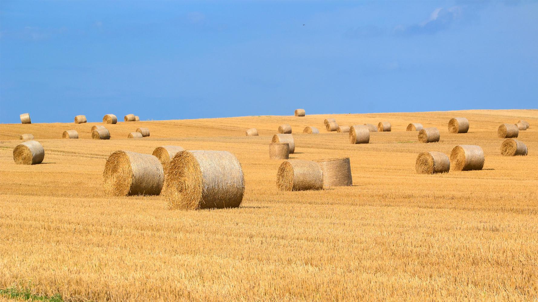 Bulgaristan Varna Satılık Buğday samanı