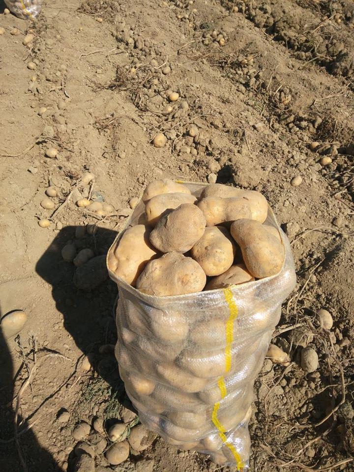 Kocaeli Darıca Satılık Patates