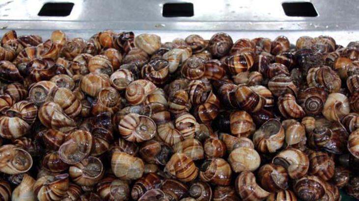 Antalya Konyaaltı Salyangoz alımı