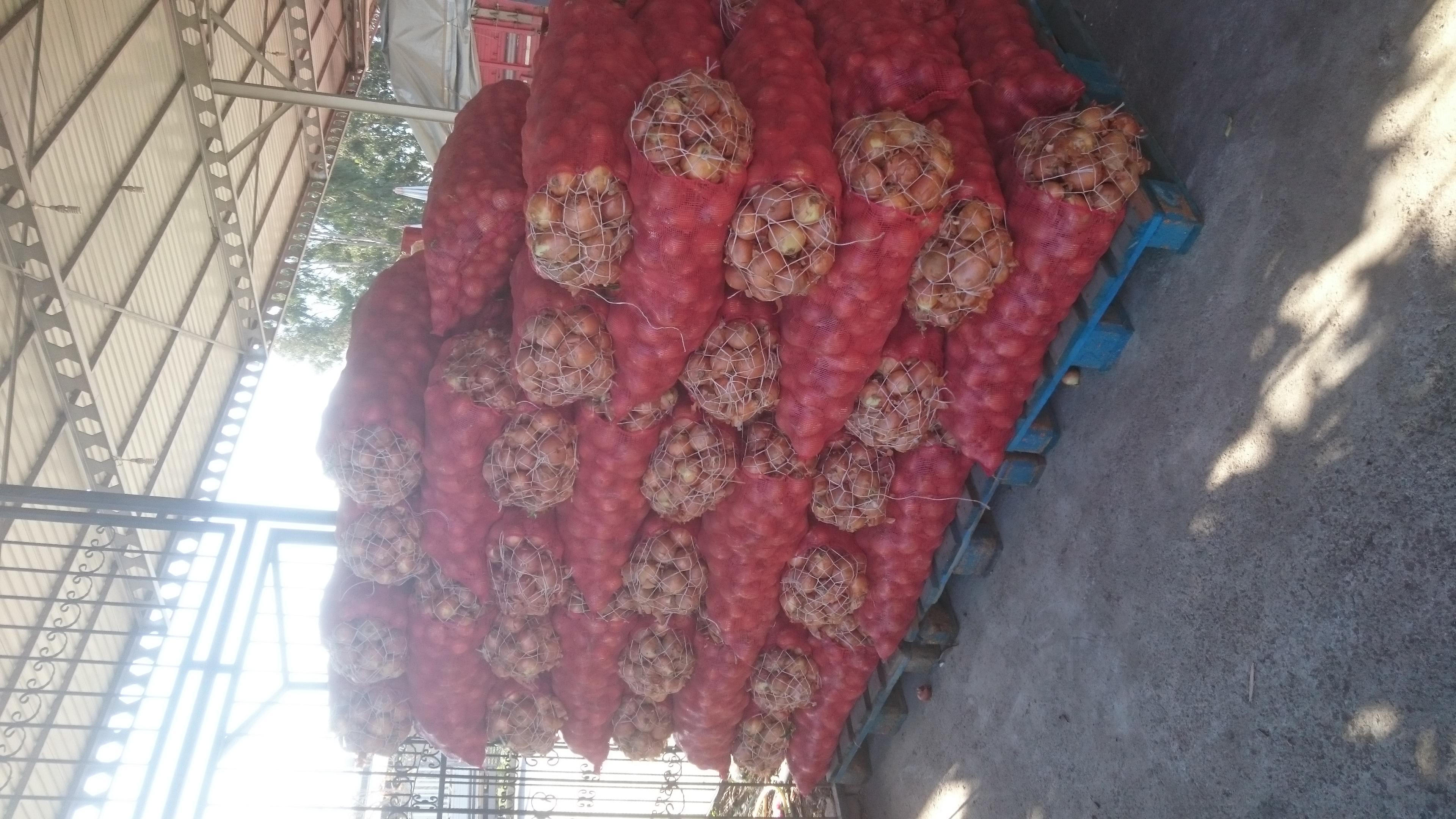 Kuru Soğan - Üretici Memduh Gül 1.6 tl fiyat ile 6 kilogram utrero çeşidi kuru soğan satmak istiyor