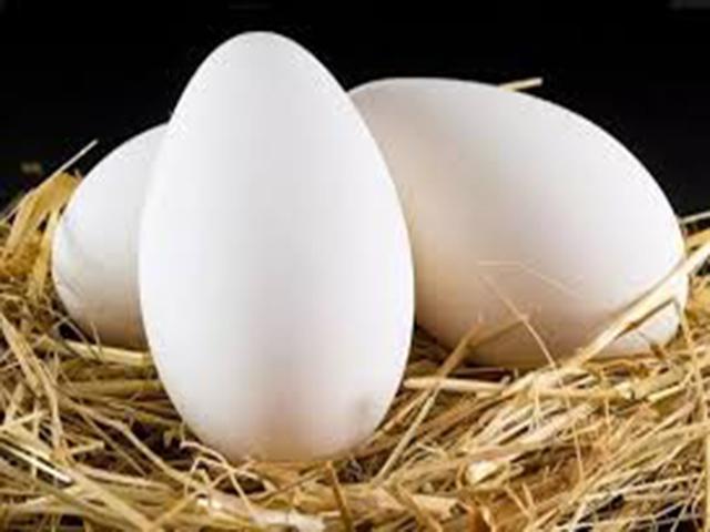 Bursa Yenişehir Satılık Kaz yumurtası