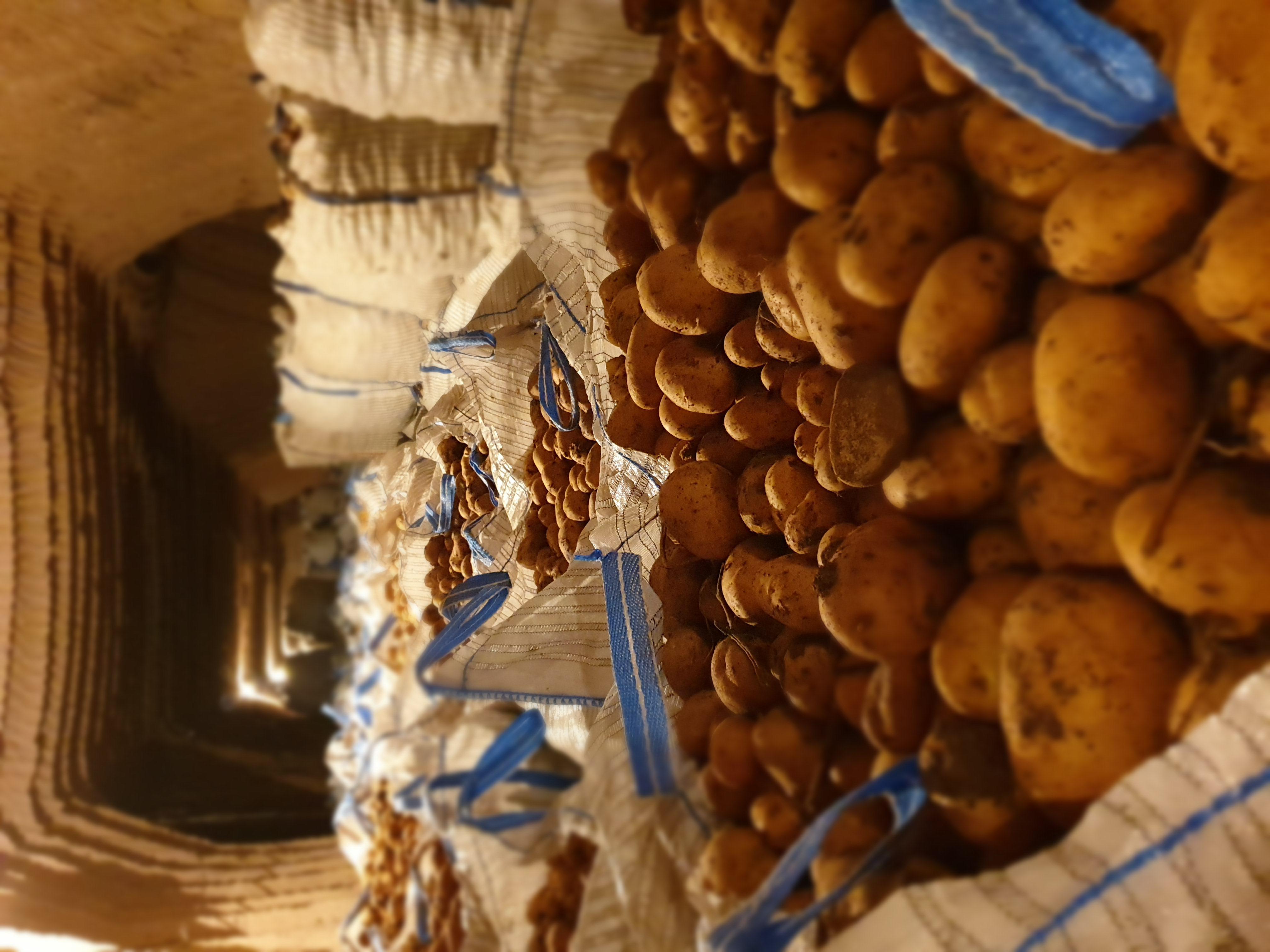 Nevşehir Merkez Satılık Patates