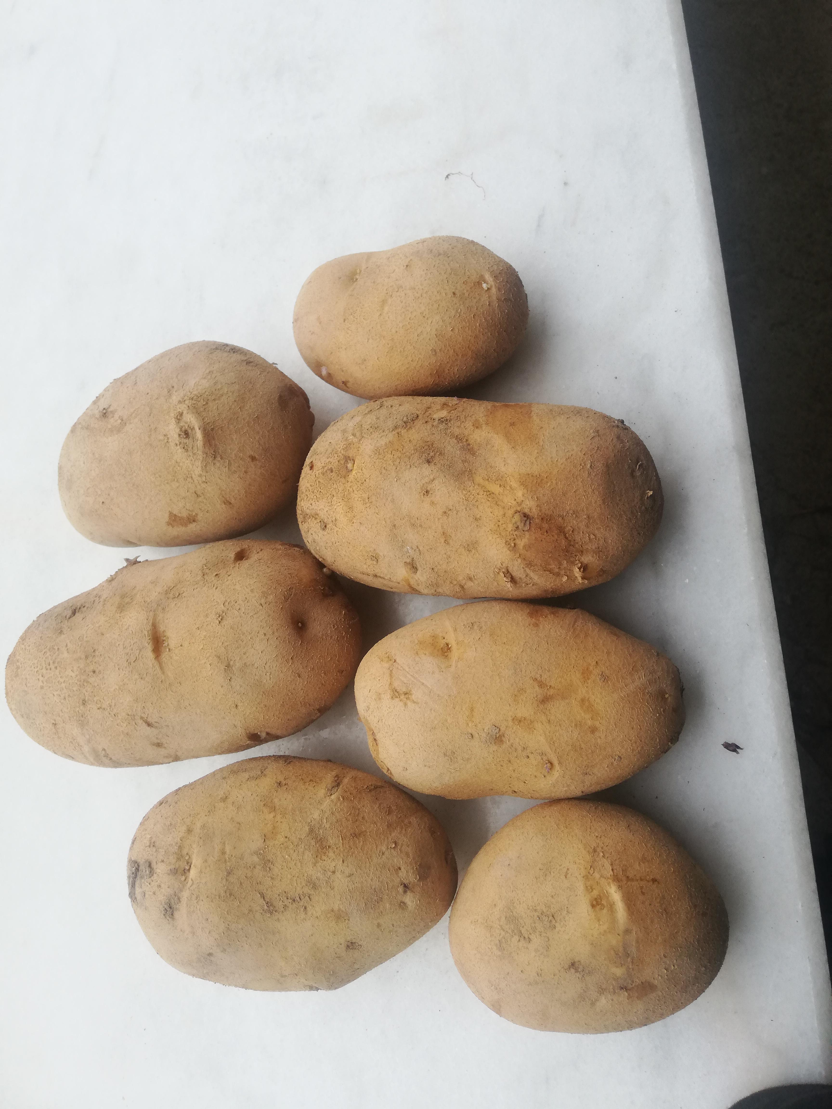 Patates - Üretici Cengiz Bali 2500 tl fiyat ile 30 kilogram agria çeşidi patates satmak istiyor