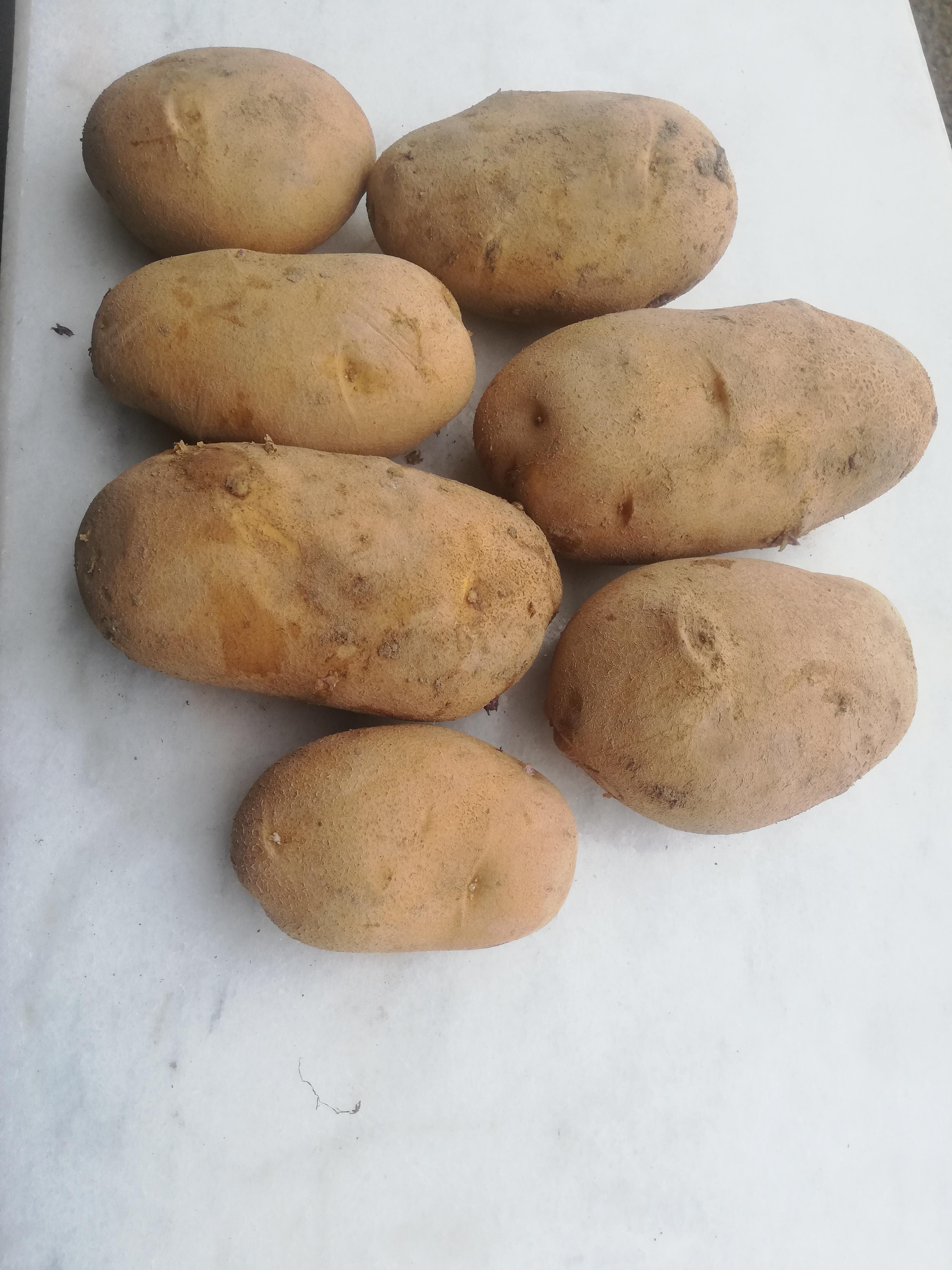 Afyonkarahisar Şuhut Satılık Patates
