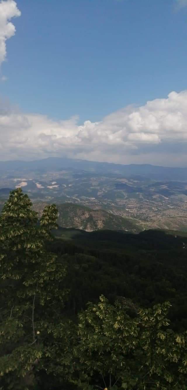 Manisa Demirci Satılık Ihlamur