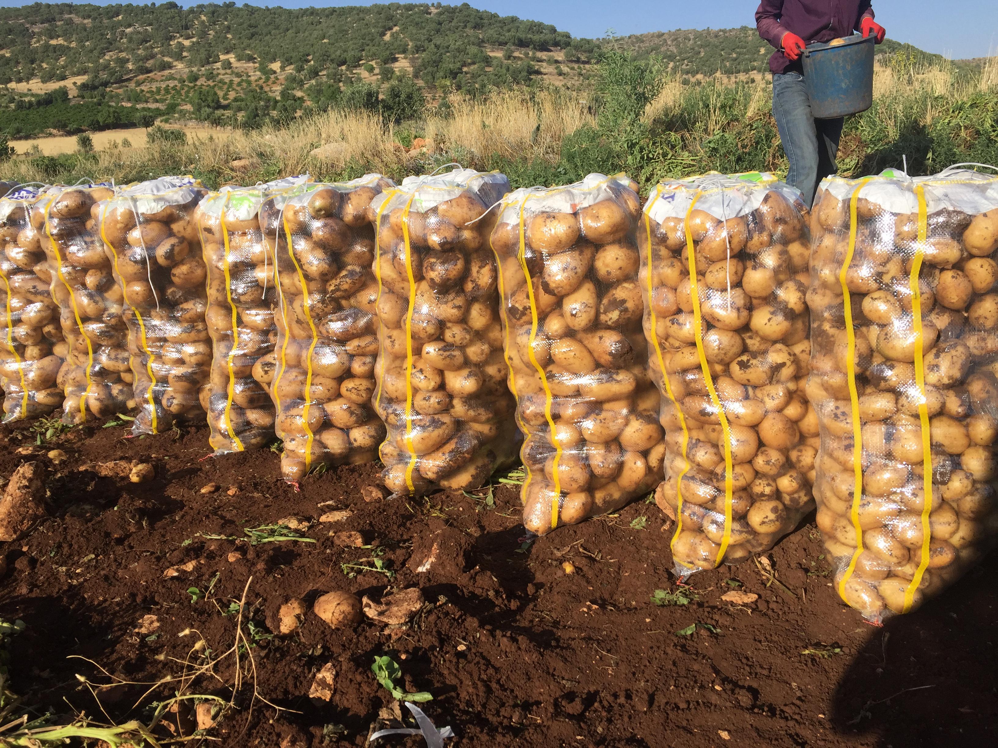 Mardin Midyat Satılık Patates