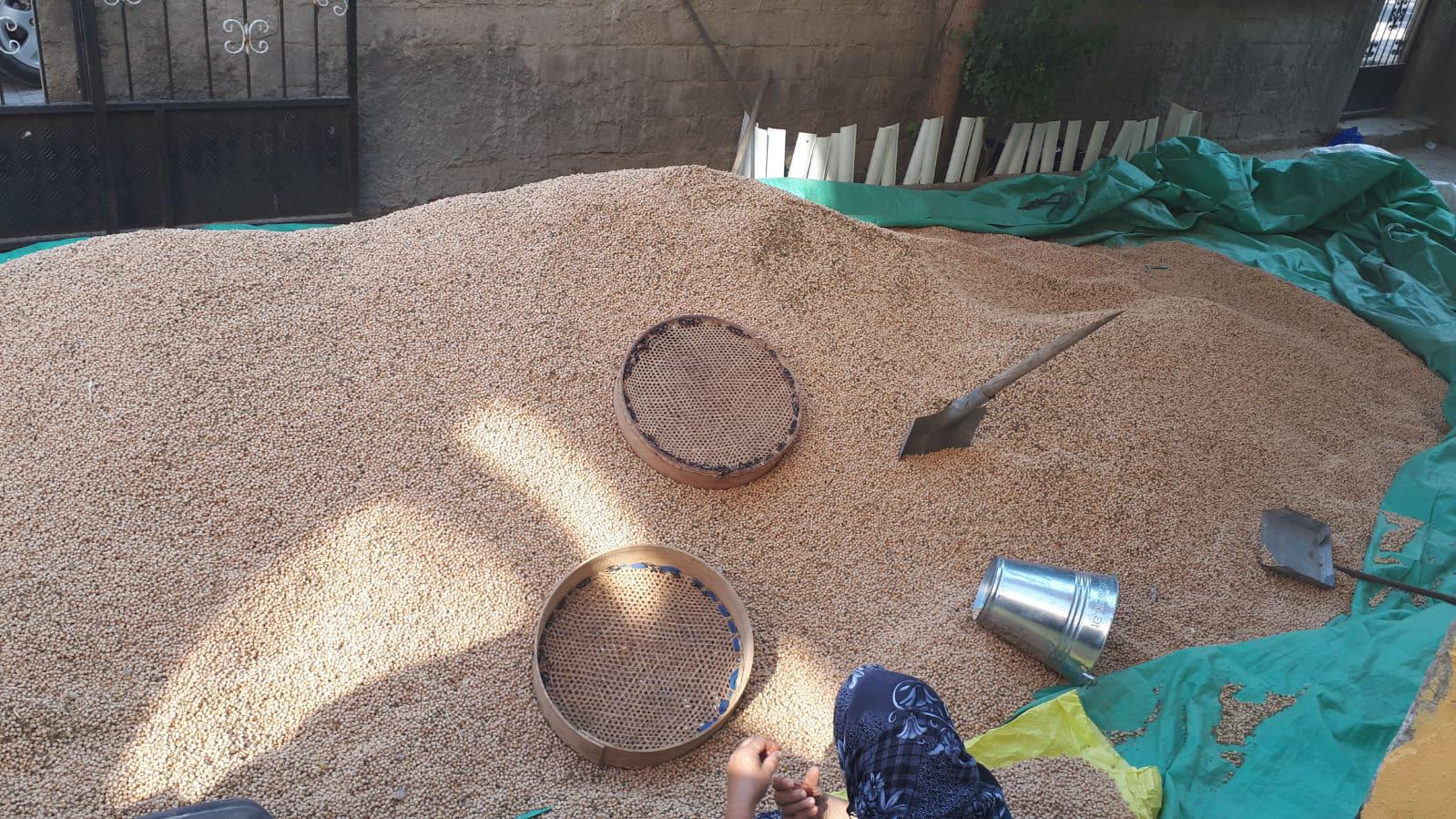 Nohut - Üretici Kadir Tobi 7 tl fiyat ile 7.000 kilogram azkan çeşidi nohut satmak istiyor