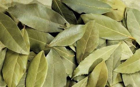 İzmir Menderes Defne yaprağı alımı
