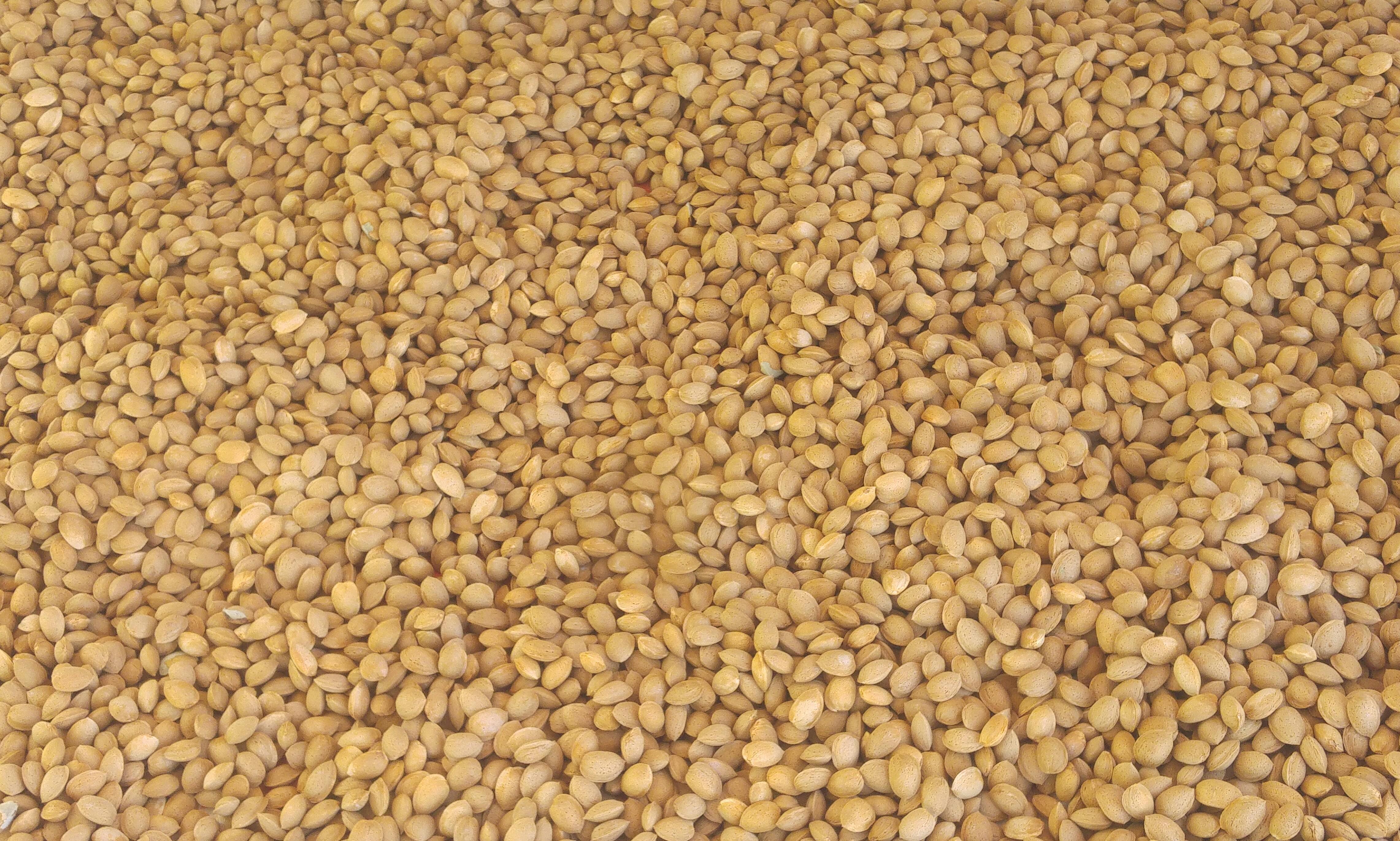 Kabuklu Badem - Üretici Bayram Türk 20 tl fiyat ile 400 kilogram kabuklu badem  satmak istiyor
